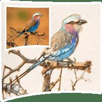 SoftOrbits Sketch Drawer 4.0 نرم افزار تبدیل عکس به نقاشی