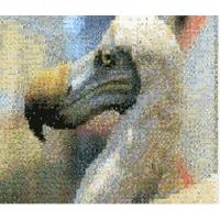 Mosaizer 12.1 نرم افزار ساخت آسان تصاویر موزاییکی