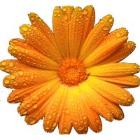 Artweaver 5.1.4.13806 نرم افزار طراحی و نقاشی