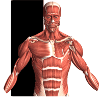Visual Anatomy 2 3.0 برنامه آناتومی و فیزیولوژی برای موبایل