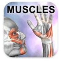 Learn Muscles Anatomy 1.5.8 برنامه آناتومی عضلات بدن برای اندروید